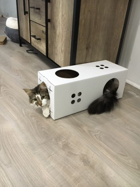 id e d co loft un parcours pour votre chat mode loft. Black Bedroom Furniture Sets. Home Design Ideas